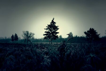 atmospheric: Atmospheric and dark image of the field and trees Stock Photo