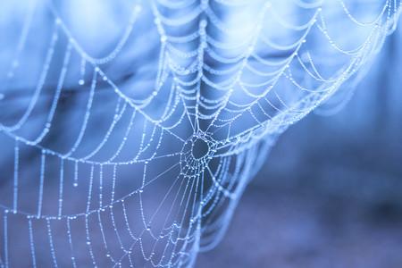 青色の背景に水滴をクモの巣 写真素材