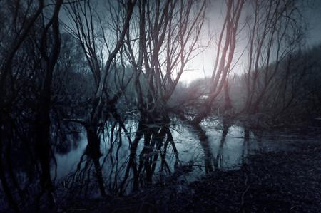 Düstere Sumpf . Reflexion der Bäume im Wasser . Sonnenunterganglandschaft