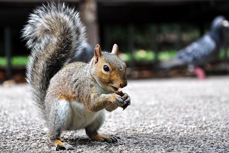 먹는 다람쥐의 사진을 닫습니다