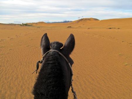 mongolia horse: Riding my horse in the Semi-Gobi desert in Mongolia