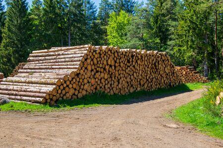 Pile of logs in Auvergne.