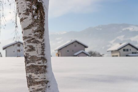 Winter landscape: Snowy trunk of a birch on a field, wintertime, blurry houses in the background