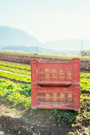 Red box for vegetables on a field, agriculture