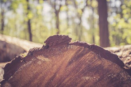 Close up picture of a fallen tree trunk, forest in the blurry background