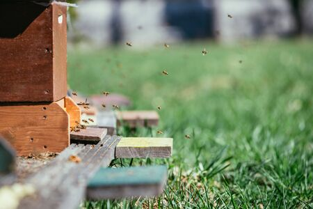 Bees are landing at the boards of a hive, spring time