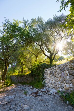 Olive trees and sunshine on Monte Baldo, Italy