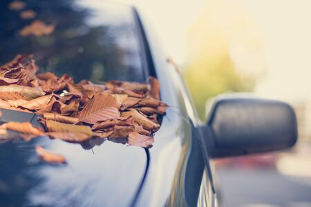 Close up of fallen leaves lying on a car window