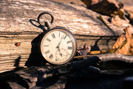 Vintage watch leans on a wood piece and dry leaves, blurriness Banque d'images - 142153975