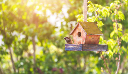 Close up of colorful wooden birdhouse hanging in the own garden, summertime