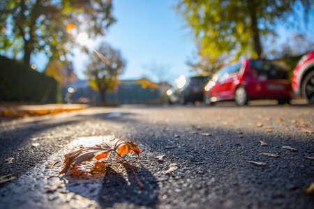 Leaf on the street, autumn, copy space