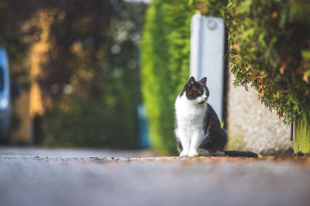 Cute black white cat is sitting on the street. Blurry background, text space