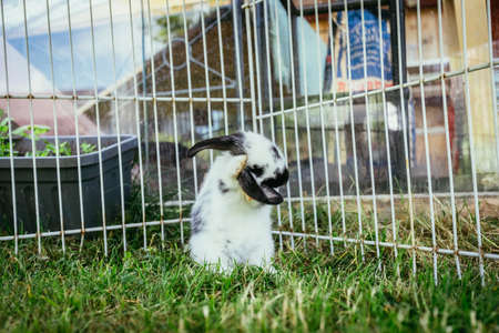 Little bunny is sitting in an outdoor compound. Green grass, spring time.