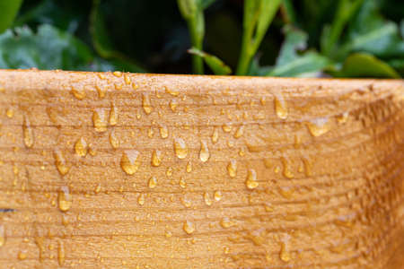 Close up of big water drops on lacquered wood after rain