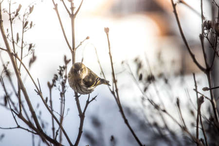 Bird is sitting on a tree branch in the winter