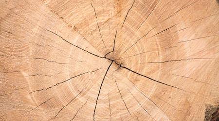 Texture of a wooden cut, brown rustic wood, closeup