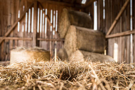 Bales of hay / straw on a farm, countryside, indoors