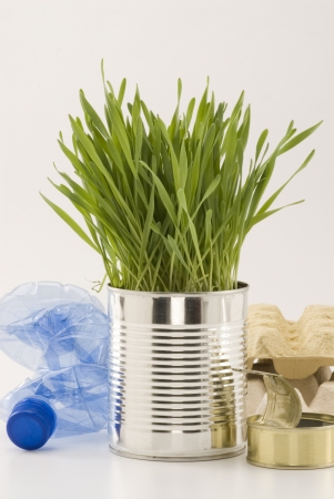 Grass growing in an aluminum recycled can  White background  Stock Photo - 15800692