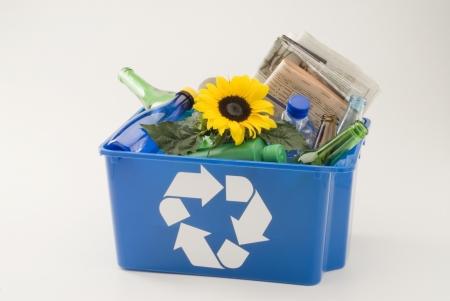 go inside: Sunflower growing in a blue recycling bin  White background