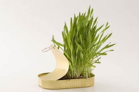 go inside: Grass growing in an aluminum recycled can  White background