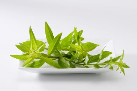 Lemon verbena leaves. Aloysia citriodora.  Naturopathy. White Background. Stock Photo