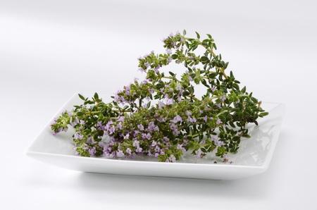naturopathy: Thyme blossom leaves. Thymus vulgaris. Naturopathy. White Background. Stock Photo