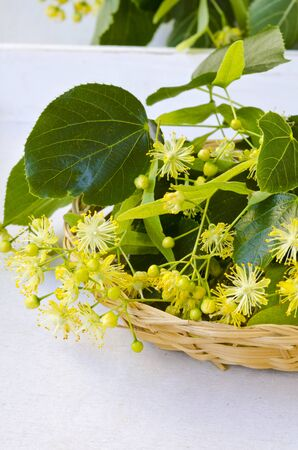 Alternative Medicine. Herbal Therapy. Lime blossom flowers in a basket. White background.
