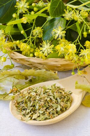 Alternative Medicine. Herbal Therapy. Fresh and dried lime blossom flowers. White background.