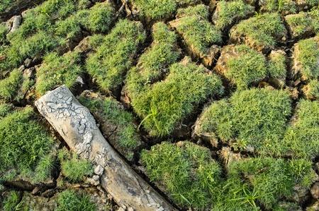 clod: log on land Stock Photo