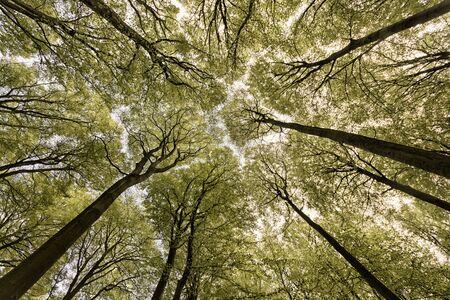 tree canopy: View at tree canopy Stock Photo