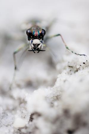 Macro photograph of a beetle Stok Fotoğraf