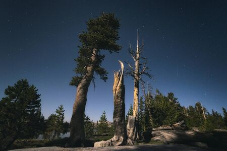 john muir trail: Landscape in the Sierra Nevada forest