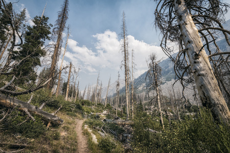 john muir wilderness: Landscape in the Sierra Nevada mountains forest Stock Photo