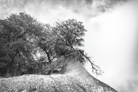 atop: Collapsing trees atop a cliff Stock Photo