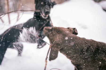 dogs playing: Dos perros jugando en la nieve