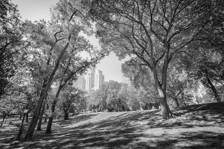 hectic: Central Park in New York City