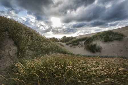 Photograph of sand dunes in Denmark Stock Photo