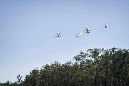 queensland: Bird flock in Queensland, Australia