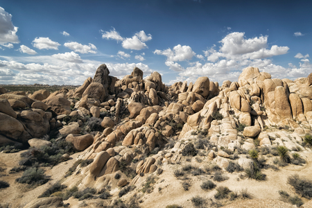 joshua tree national park: Landscape at Joshua Tree National Park, California