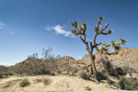 joshua: Landscape at Joshua Tree National Park, California