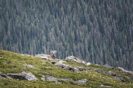 conservation grazing: Landscape photograph taken in Rocky Mountains National Park, Colorado