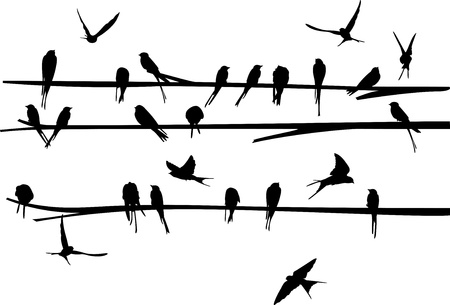 swallow bird: Set of Swallow on branch