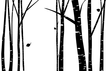 arboles blanco y negro: Abedul blanco Vectores