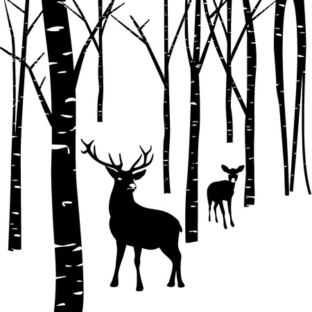 birch forest: Couples of deer walking around winter forest