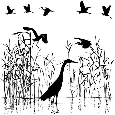 swampland: Group of Egrets in swampland illustration Illustration