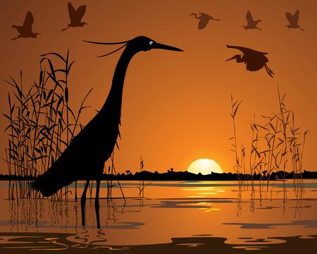 Birds in sunset swamp illustration