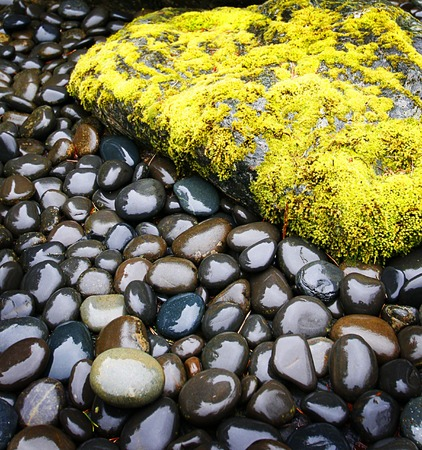dense mats: moss covered rock surrounded by smaller pebbles on a rainy day Stock Photo