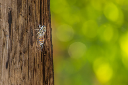 cricket insect: Cricket Insect on a tree