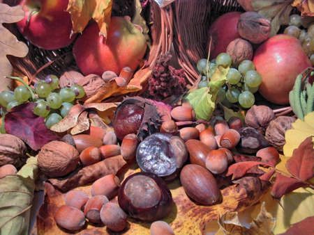 Fruits of late autumn Stock Photo - 2033222