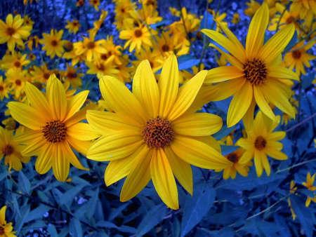 fleurs des champs: Wildflowers avec le fond bleu